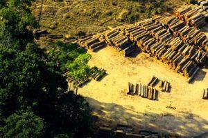 corte ilegal amazonia